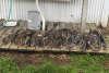46 catfish caught at lake tawakoni