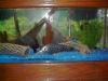 from my aquarium fish
