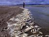 Shore Line fish